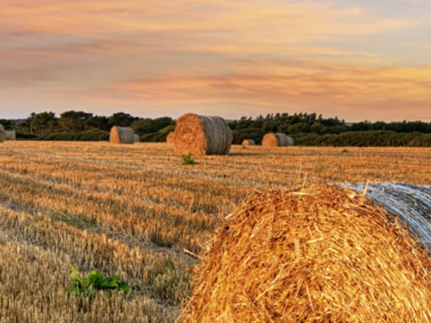Hay stacks in a field - Groundsure Agricultural Search report image